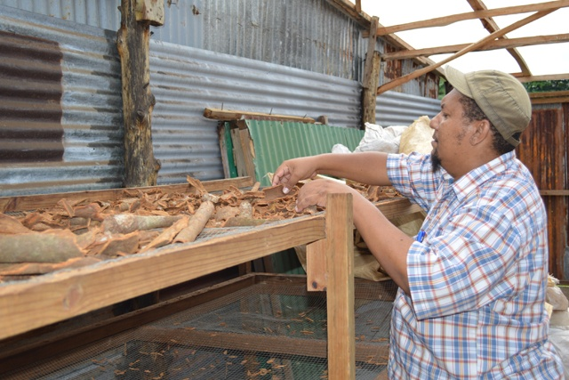 La cannelle un parfum qui s'évanouit  aux Seychelles