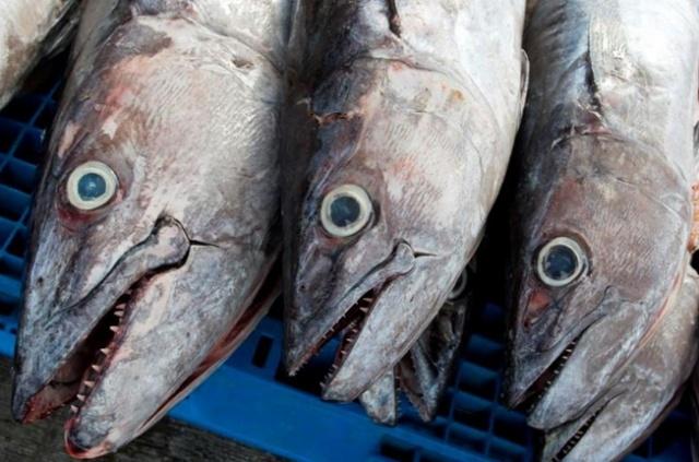 L'une des familles les plus riches de France investit 16 millions€ dans un quai de pêche aux Seychelles.