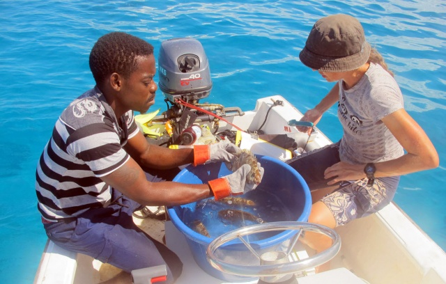 Nature Seychelles is tagging fish to find their migratory movements
