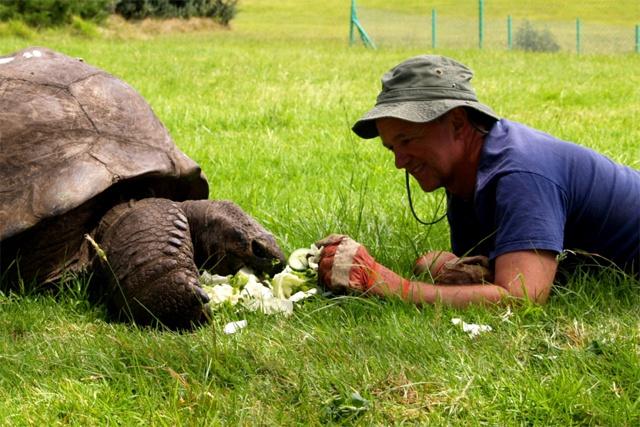 182 year-old Seychelles giant tortoise still going strong – meet Jonathan, the world's oldest animal