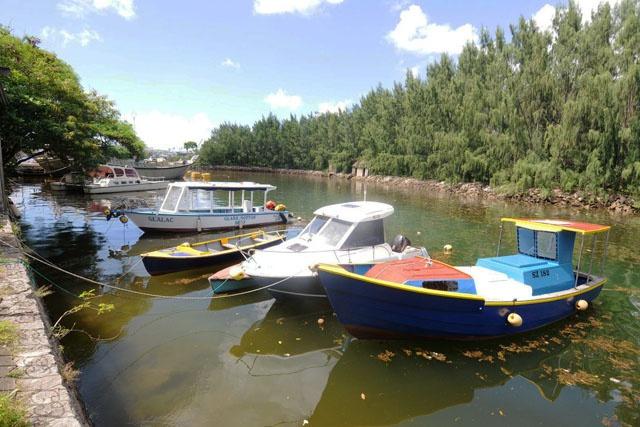 Des algues suspectes dans la zone du port de Victoria