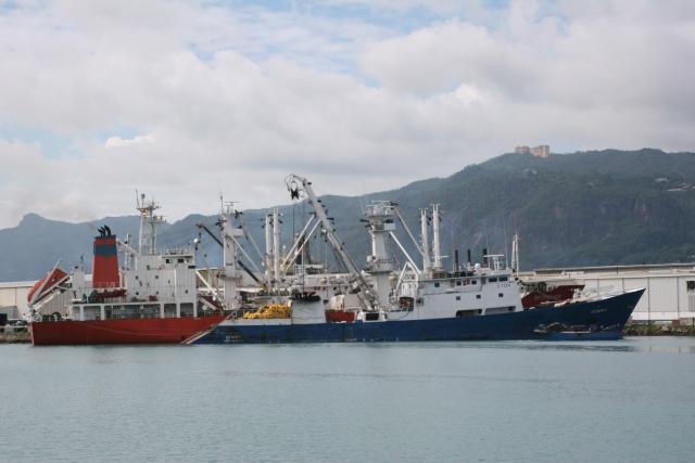 L'Union Européenne autorise des thoniers des Seychelles à pêcher dans les eaux de Mayotte