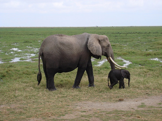 Insecurity leads to Kenya's tourism decline