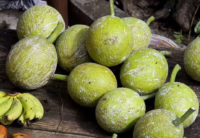 Scientists realize bread DOES grow on trees – breadfruit tapped as solution to food security danger