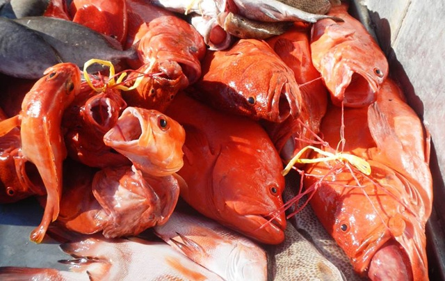 Nature Seychelles: Praslin coastal fishery plan is a disruption of the business-as-usual model