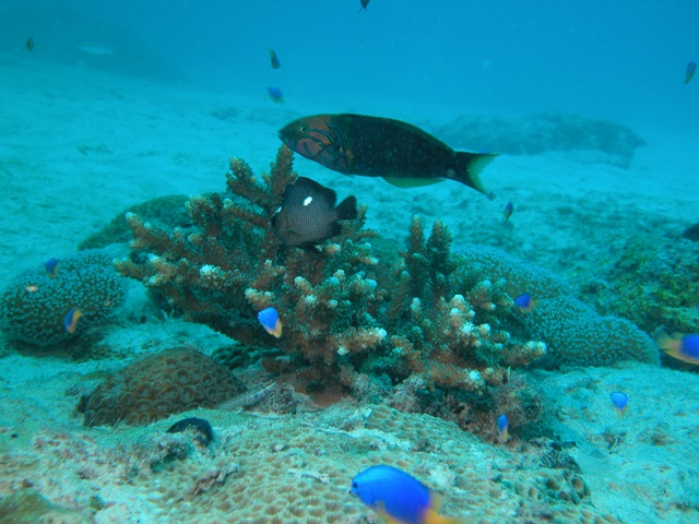 Le corail des Seychelles plus résistant à la chaleur