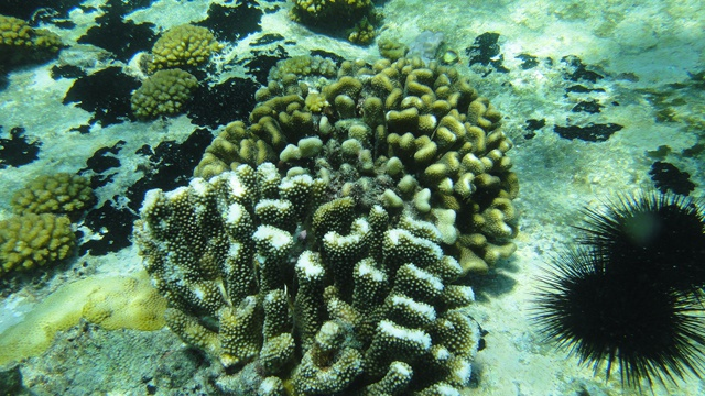 Seychelles coral reefs just beginning to show signs of recovery, say researchers