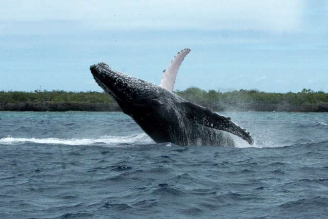 Don't pooh-pooh this research! Scientists say whale excrement could save the planet