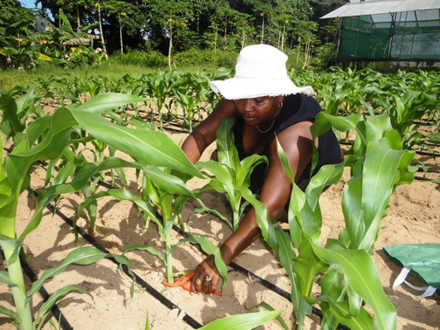 Boosting the agricultural sector to ensure food security – Seychelles is finalizing national agricultural investment plan