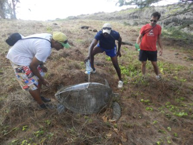 Tourists on holiday in Seychelles hailed as conservation heroes as they spot trapped turtle in need of help on Silhouette