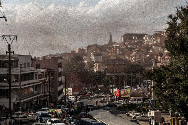 La capitale de Madagascar envahie par les criquets