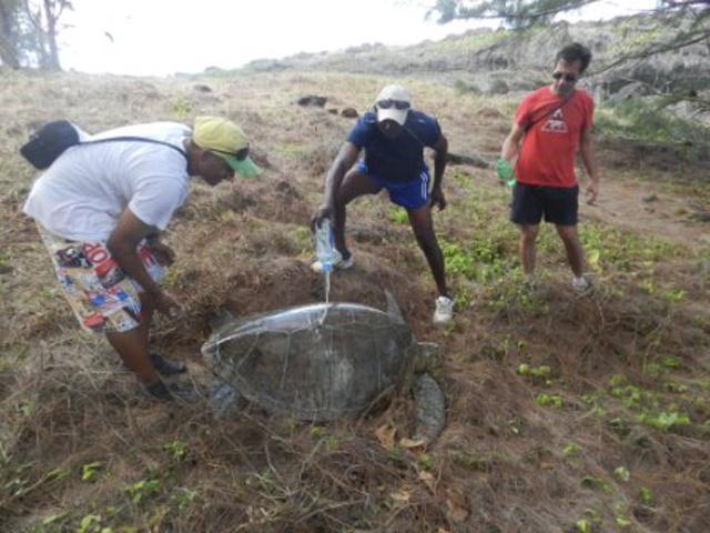 Un couple de Français sauve une tortue à Silhouette, île des Seychelles