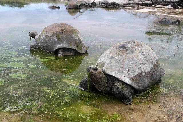 La Fondation des Iles Seychelles veut mieux protéger Aldabra et ses tortues géantes