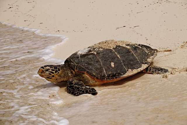 Nature Seychelles research reveals Seychelles' best kept turtle secrets