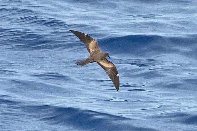 Des oiseaux rares observés aux Seychelles ouvrent des possibilités d'éco-tourisme