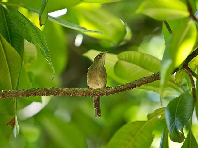 Les Seychelles parmi les 5 États insulaires qui œuvrent contre l'extinction de ses espèces endémiques