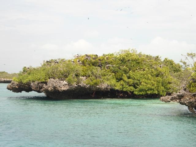 À la découverte d'Aldabra, atoll des Seychelles, pour sa  faune et sa  flore unique