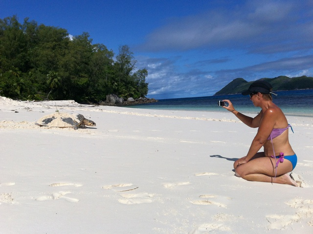 Les tortues à écailles font leur retour sur les plages des îles Seychelles
