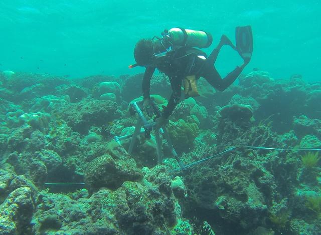 SIF keeps a close eye on 'Black Disease' in coral reefs of Aldabra