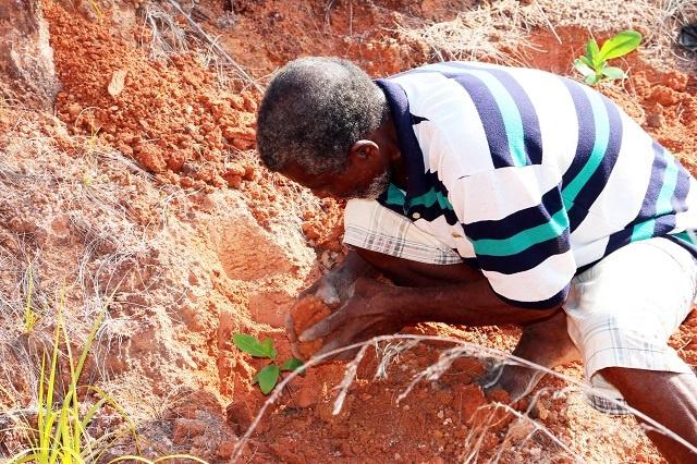 Redonner vie à la végétation de Praslin, île des Seychelles