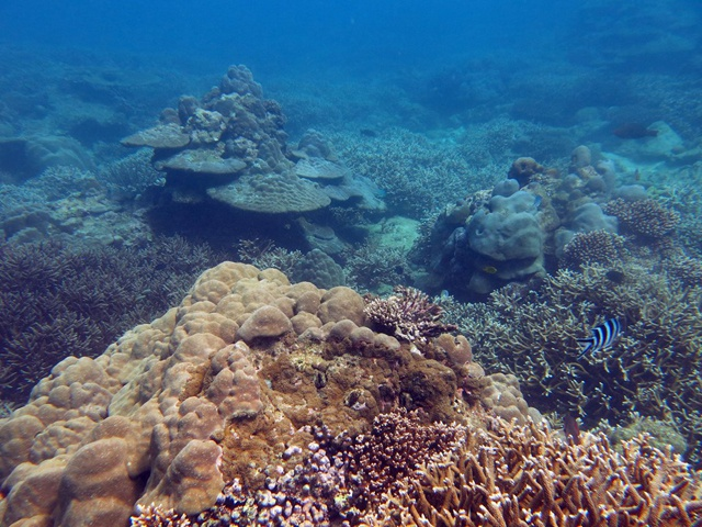 Seychelles-based study gives hope for coral reef resilience against global warming
