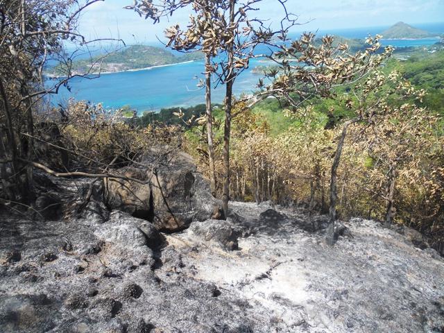 Des palmiers endémiques des Seychelles partis en feu dans l'incendie de Port Glaud