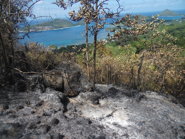 Seychelles endemic palms lost in Port Glaud fire