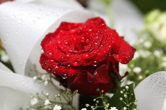 La rose, le cadeau emblématique aux Seychelles pour la Saint Valentin