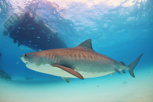 Giving power to the people: Madagascar creates first community-controlled shark sanctuary