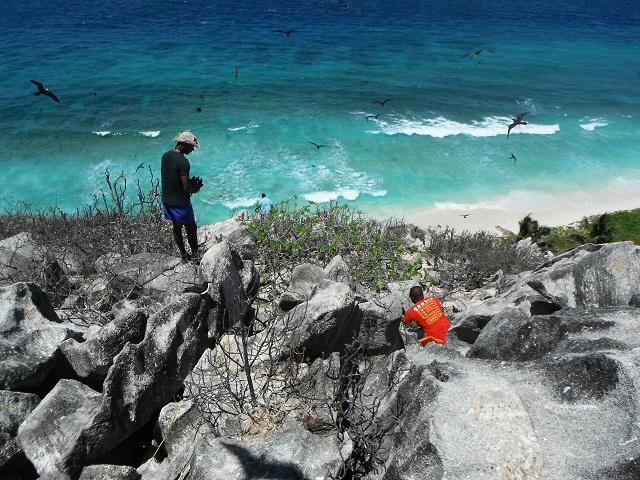 Aride versus invasive ants! Seychelles island gets tough on notorious big-headed ants