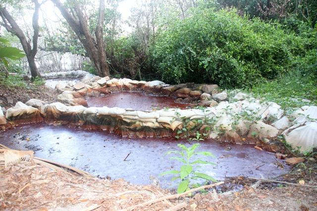Une zone de mangrove polluée à réhabiliter à côté du complexe hôtelier « Raffles Praslin » aux Seychelles