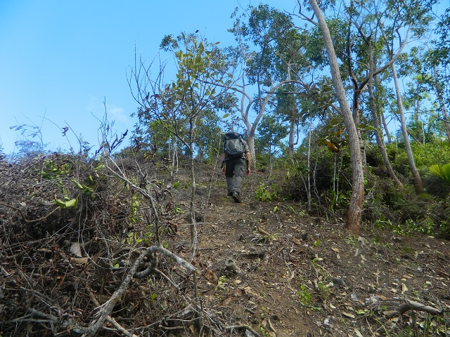 Making space for Seychelles endemic flora - Massive number of introduced and invasive plants being removed