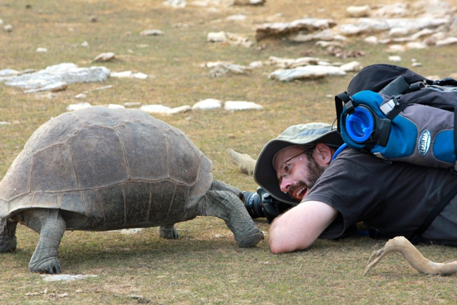 Fearsome predators - if only they moved faster! 8 facts you never knew about giant tortoises