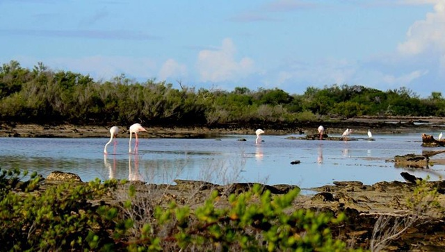 Le flamant rose - une espèce très rare a été repérée sur l'atoll d'Aldabra -une des îles des Seychelles