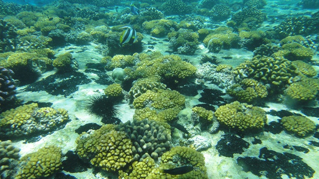 Atlantic Ocean corals under threat – U.S. scientists use Seychelles data to predict bleaching loss