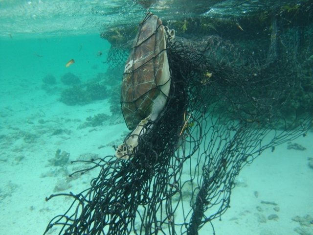 Une ONG va militer pour que l'industrie de la pêche contribue au nettoyage des DCP échoués dans les eaux des Seychelles