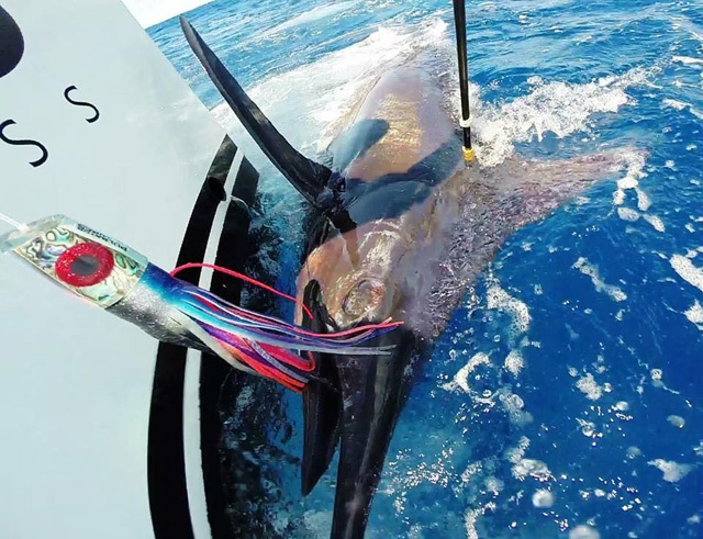 Catch, tag and release: Seychelles sports fishing club and fishing authority join hands to preserve billfish populations