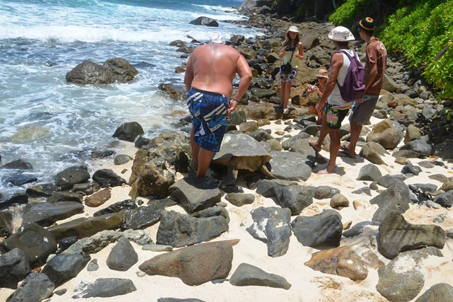 Belgian couple team up with French couple to save distressed green turtle while holidaying on the Seychelles island of Silhouette