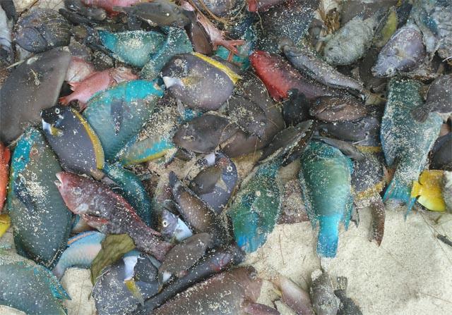 Des planctons toxiques responsables de la mort des poissons aux Seychelles
