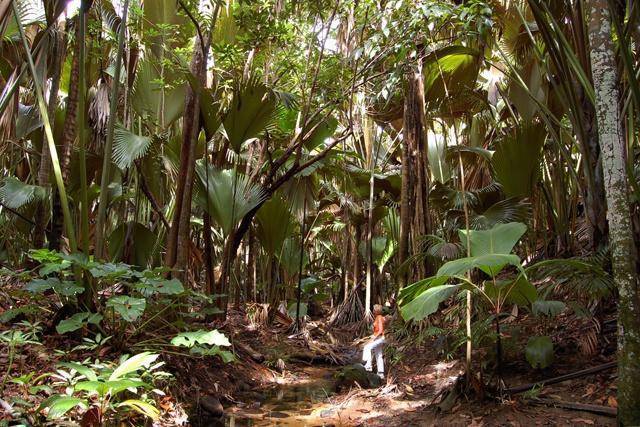 Les sites du patrimoine mondial de l'UNESCO aux Seychelles reconnus  comme des modèles pour lier le patrimoine culturel et la nature.