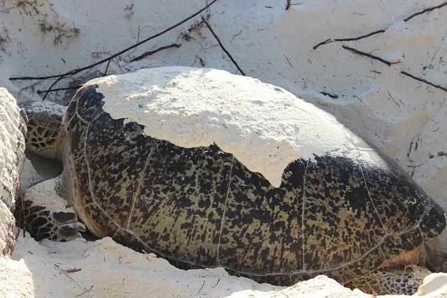 Curieuse, île des Seychelles, un havre de paix pour les tortues