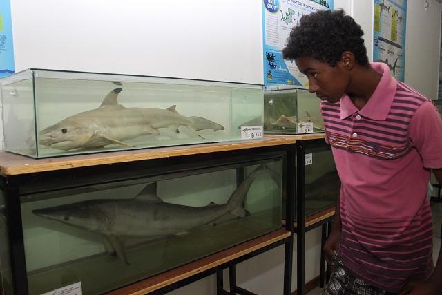 Le Musée d'Histoire Naturelle des Seychelles accueille des requins