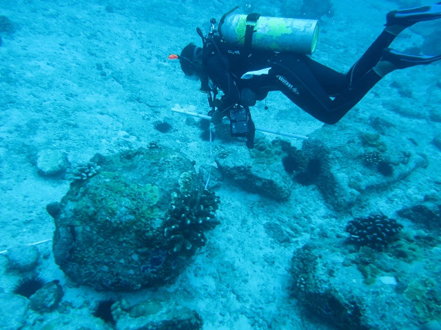 Hunt for rare coral in Seychelles finds the pearl bubble coral