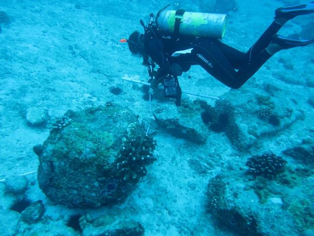 Découverte aux Seychelles du rare corail à bulles