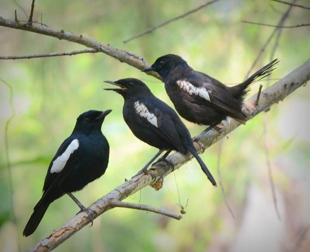 Succès : L'île Denis aux Seychelles constate une hausse de la population aviaire