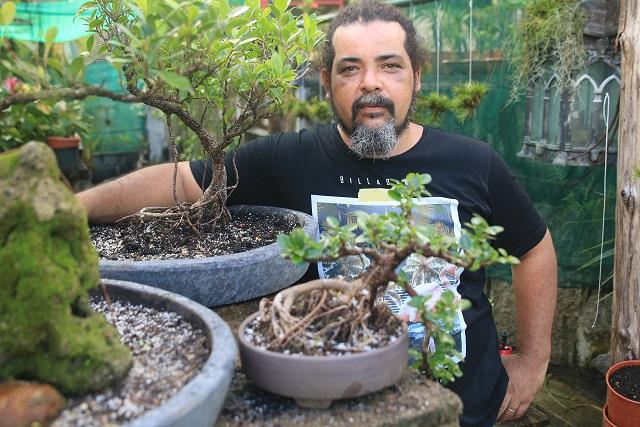 Des arbres miniatures cultivés aux Seychelles, une partie de l'art japonais du bonsaï