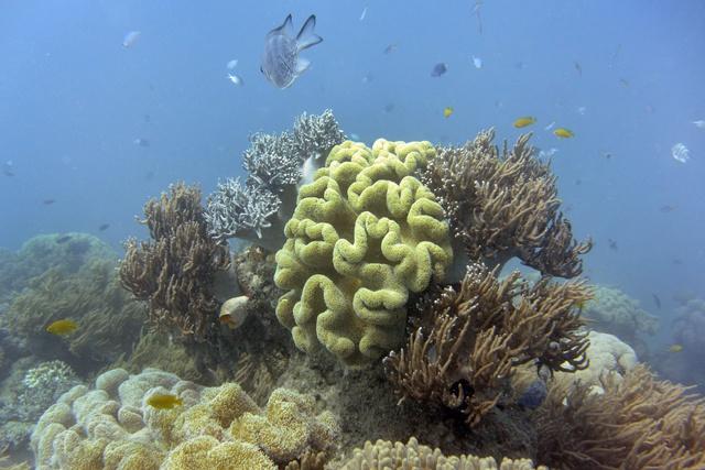 Australie: la Grande barrière traverse un des plus graves épisodes de blanchissement de coraux