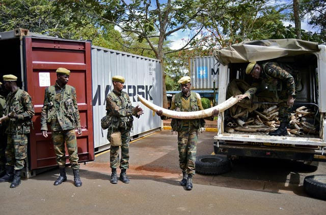 Ivory trucks arrive in Kenyan capital for mass burning