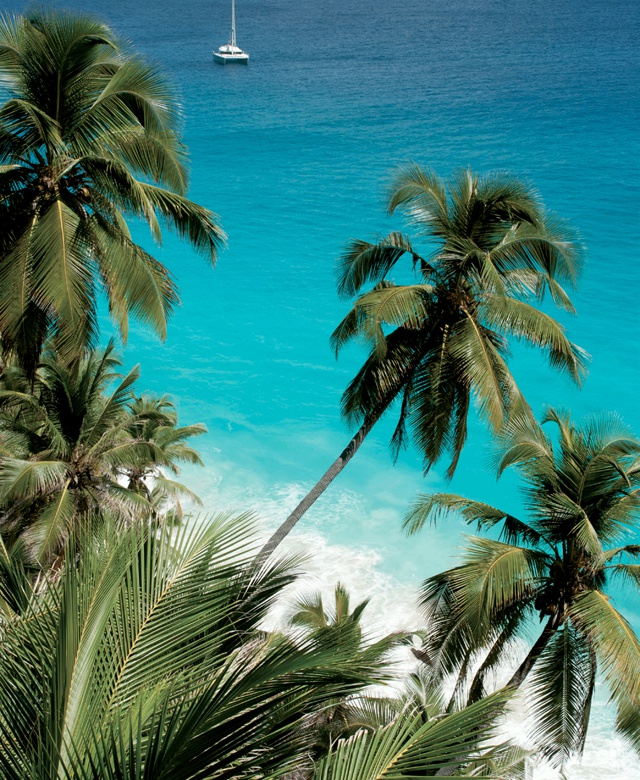 5 ways Seychelles uses coconut oil