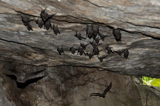 Les origines volcaniques de Silhouette aux Seychelles créent un habitat idéal pour une des espèces les plus rares au monde